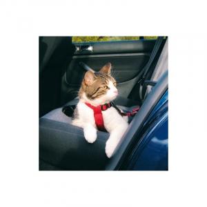Sikkerhedssele kat