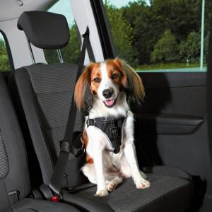 Sikkerhedssele hund. S-M, 40-55 cm./20 mm. Sort