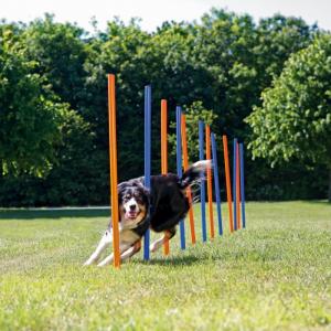 Agility stænger til hund. God kvalitet. Ø3x115 cm. Blå/orange