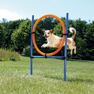 Agility ring til hund.Ø3x115/65 cm. Blå/orange