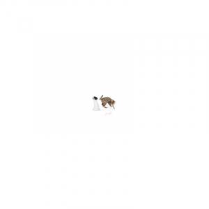 Interactive Lazer Beam. Laser roterer 360 g. og holder din hund og kat fanget af legen.